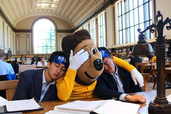 sleepy berkeley student with mascot